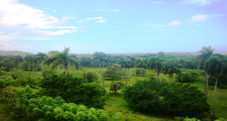 Abreu,Sale - Land,1048
