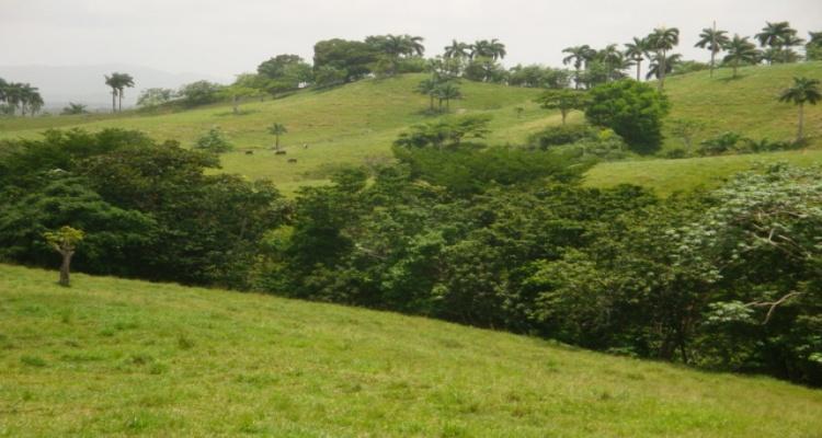 Cabrera,Sale - Farms,1071
