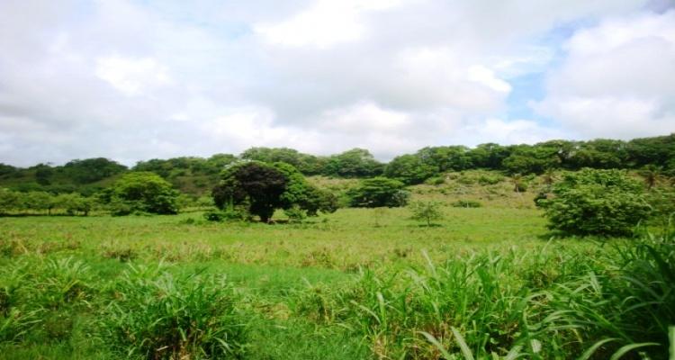 Cabrera,Sale - Farms,1083